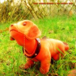 [KPHB] my doggy dog
